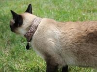 WarKitteh: ojo al gato ¡quitawifi!