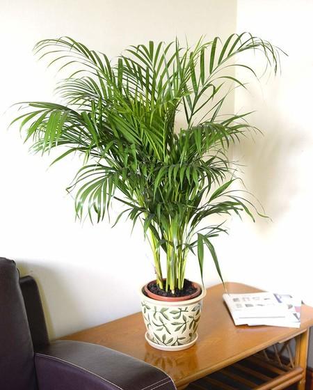 Planta De Inerior