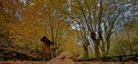 Citas para fotografiar el otoño: Fragas do Eume, A Coruña
