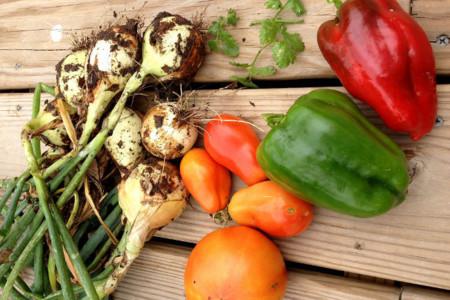 Alimentos menos procesados, alimentos con más nutrientes
