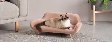 Los mejores muebles y accesorios para gatos