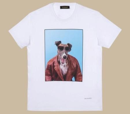 Galgos en tu camiseta más fashion
