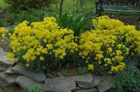 Flores para nuestro jardín sostenible
