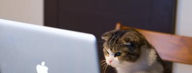 25 sitios web completamente inútiles pero adictivos