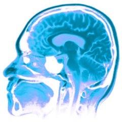Nuestro cerebro como sistema de autentificación