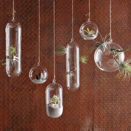 Burbujas de cristal para colgar tus plantas