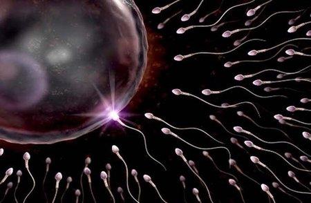 Cuántas veces hay que hacer el amor para quedar embarazada: espermatozoides