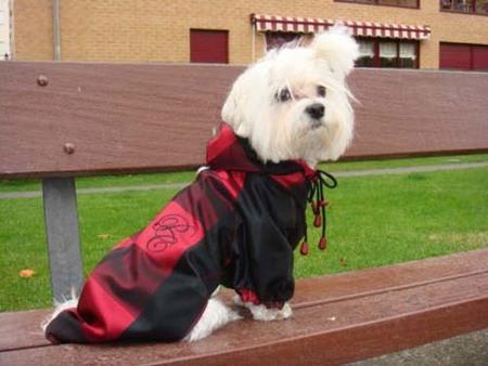 The Puppy Catwalk, haute couture para tu perrito