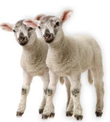 Alimentos derivados de animales clonados en breve en Europa