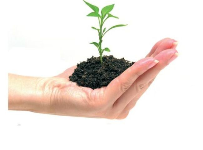 Si te tragas una semilla, te crecerá un árbol en el cuerpo (dependiendo del agujero por el que la tragues)