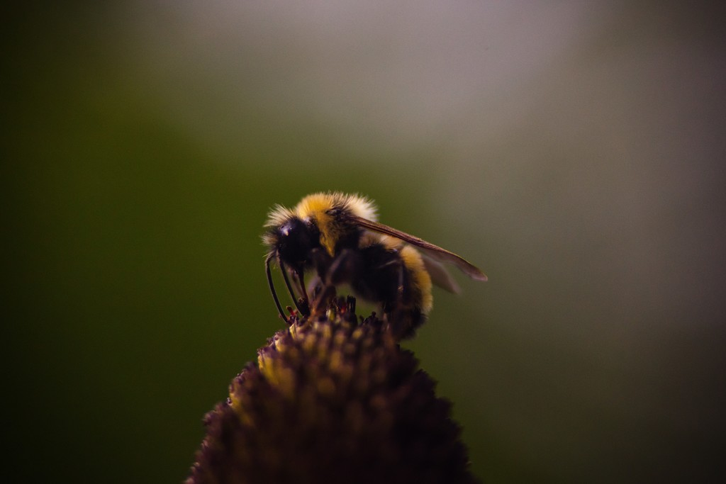 El silencio de las abejas: cuando cada eclipse es una noche en miniatura