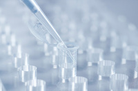 La UE prohibe a partir de hoy la venta de cosméticos testados en animales