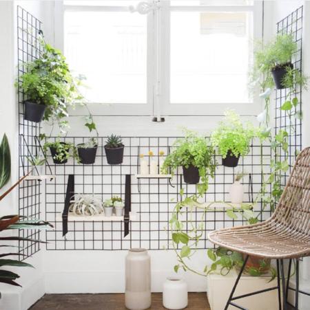 Decorando con plantas, deja que la naturaleza entre en tu piso
