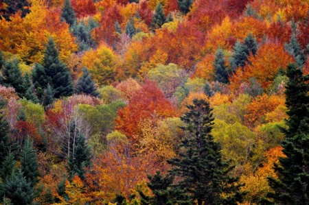 Bosque De Irati