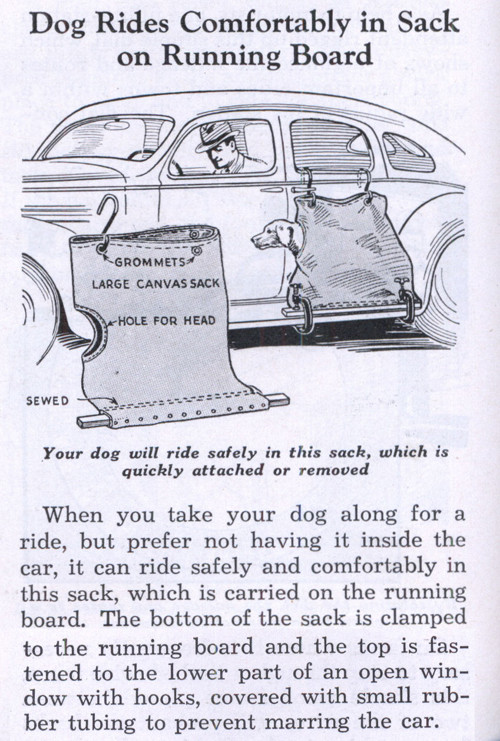 Dog Sack