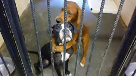 """Así es como esta tierna imagen de dos cachorros """"abrazados"""" les salvó la vida"""