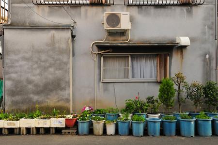 Cultivos caseros