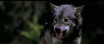 'La Marca del Lobo', la señal del bodrio