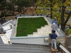 Una cubierta vegetal