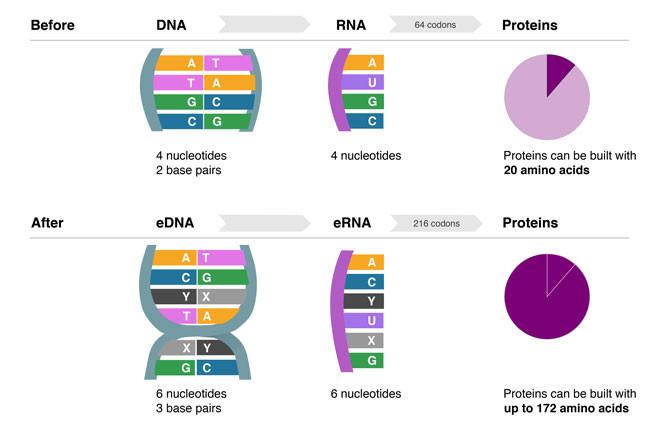El abecedario de las secuencias genéticas se expande y trae nuevos retos