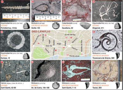 Guía de fósiles en Barcelona