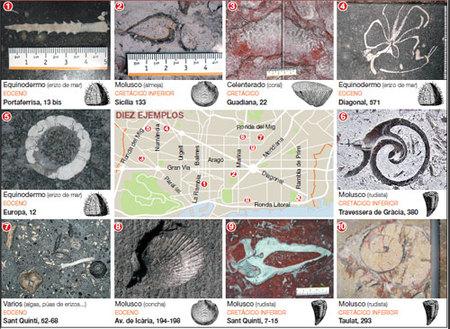 Fosiles en BCN