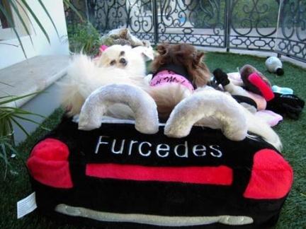 Un coche de peluche para tu mascota