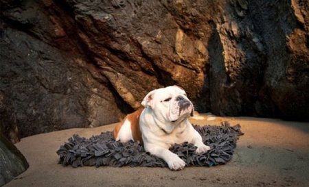 Colección de alfombras para mascotas