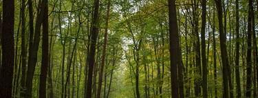 Ahora hay más árboles en España que hace un siglo