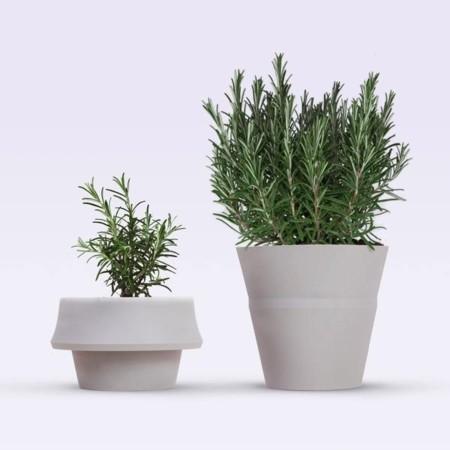 Las plantas crecen, y esta maceta también