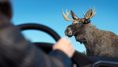 Volvo XC60 Moose Test