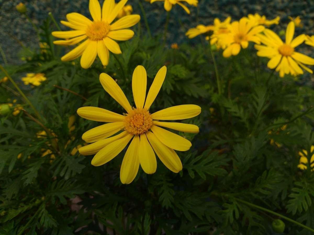 Foto de Padfone 2 muestras fotos (9/11)