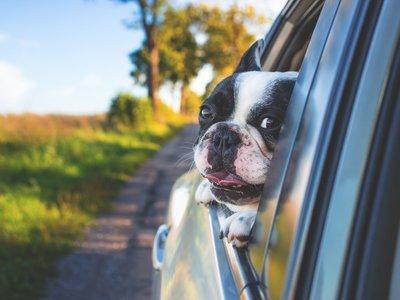 10 consejos para viajar en coche con tus mascotas esta Semana Santa