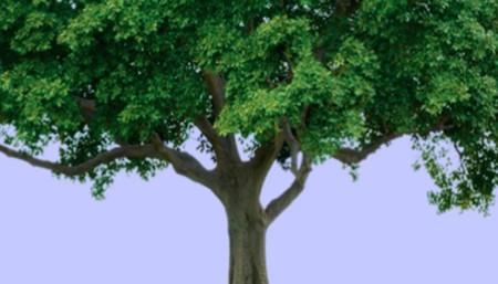 arboles-dia-tierra