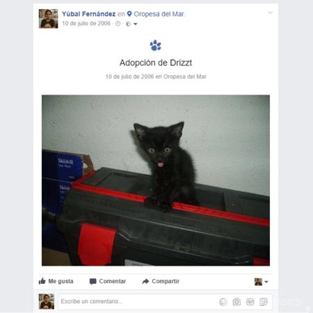 Adopcion De Drizzt