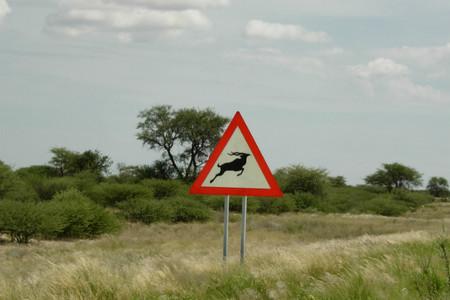 impala-senal-trafico-namibia