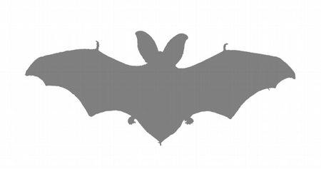 cortina murciélago 2