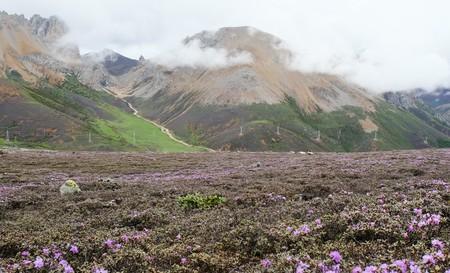 La flora alpina más antigua del mundo se descbre en China