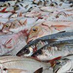 Microplásticos y mercurio en nuestros pescados: estudios demuestran que estamos acabando con nuestro mediterráneo y poniendo nuestra salud en peligro