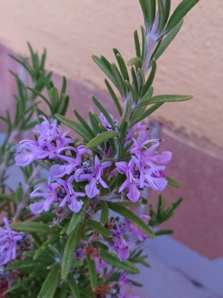 Flor Romero Exterior