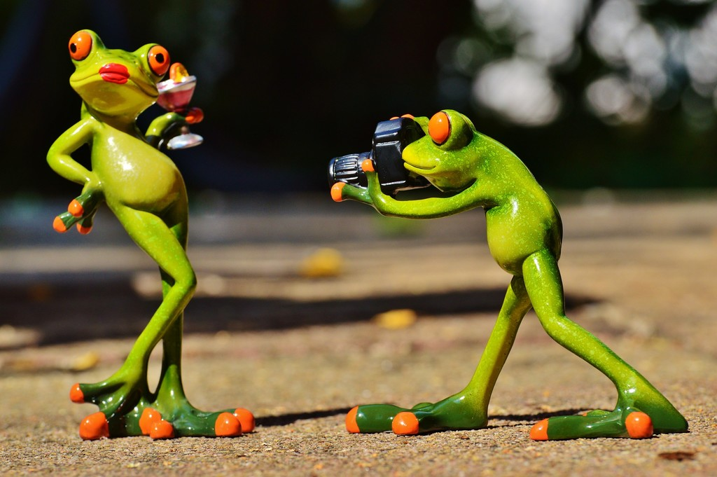 Frog Camera