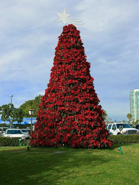 Poinsettia Tree