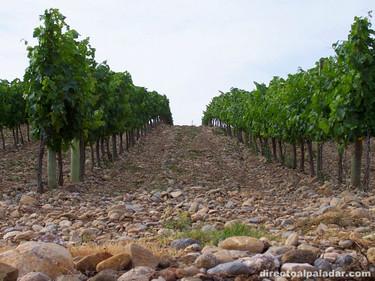 Viñas del Vero Secastilla 2004