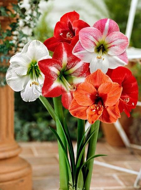 Cinco flores para decorar tu casa en primavera - Como acabar con las ratas en mi casa ...