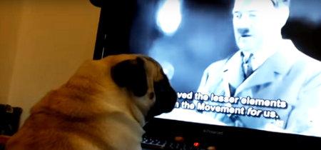 Condenan a un YouTuber que enseñó el saludo nazi a su perro