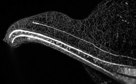 Una mirada única al fascinante mundo microscópico a través de los 26 vídeos ganadores del 'Nikon Small World in Motion 2018'