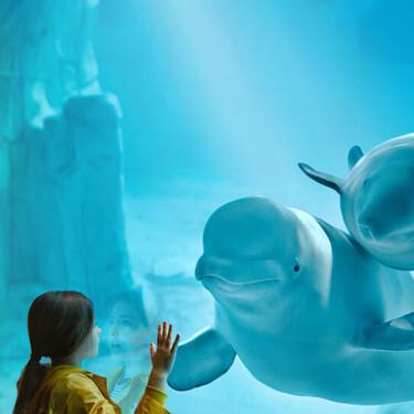 Los 11 mejores acuarios en España para visitar con niños
