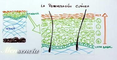 Qué es la regeneración de la piel y su importancia en el afeitado