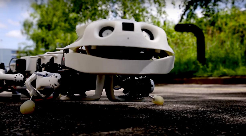 El robot salamandra, el robot mono y otros robots animales, ¿por qué son importantes?