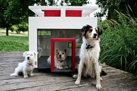 casa diseño perros 1